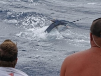 black_marlin2